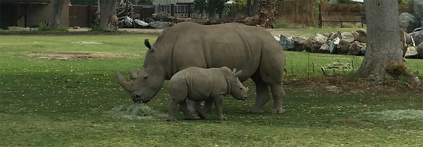 Kayla and Baby Rudo Rhino